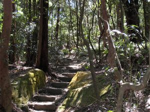 bushland-park