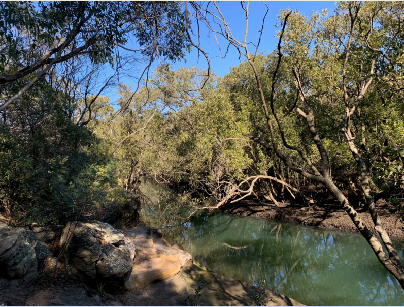 Field-of-Mars-Reserve-Lane-Cove-Mangrove-Walkway-Lane-Cove-Valley-Walk-to-Sugar-Loaf-Point-on-the-western-bank-of-Lane-Cove-River