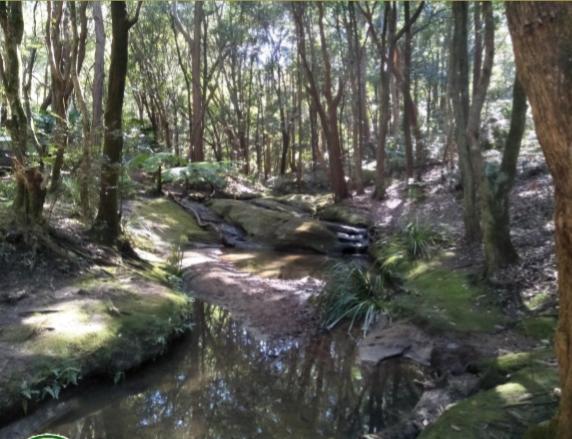 Lane-Cove-Bushland-Park