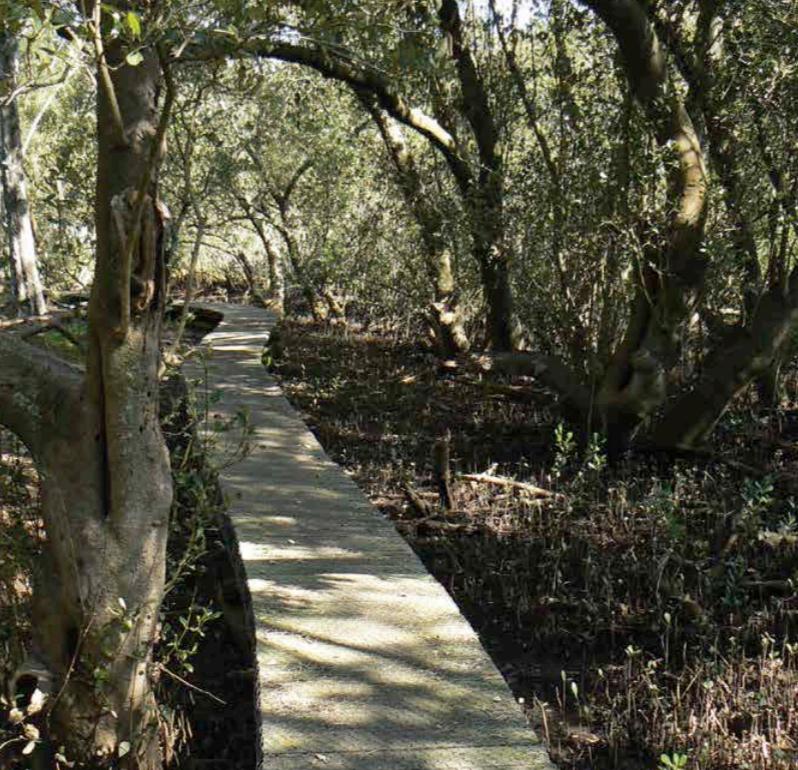 Ventemans-Reach-Lane-Cove-River-stroll