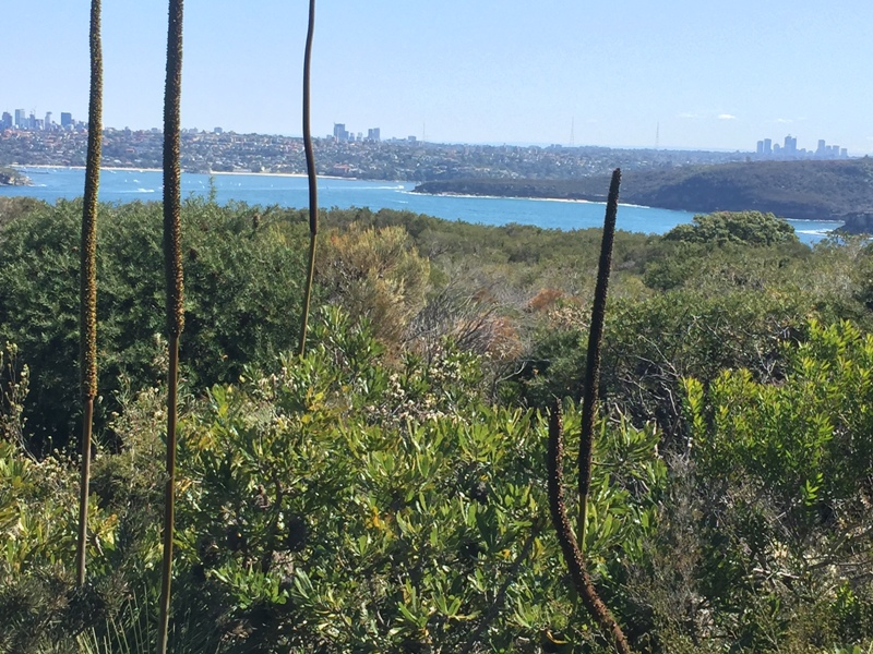 Harbour view from North Head